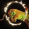 Цирки в Новомосковске
