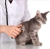 Ветеринарные клиники в Новомосковске